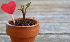 PMI e content marketing: crea valore per i tuoi clienti